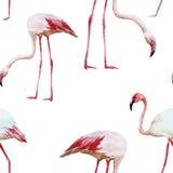 Flaminga wzór Zdjęcie Stock