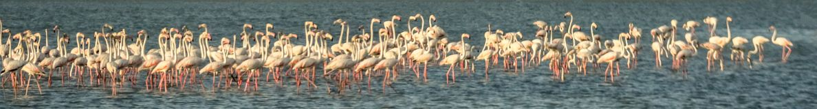 flamingi Obrazy Stock