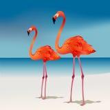 flamingi dwa Fotografia Royalty Free