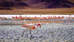 Flamingi przy laguną obraz stock