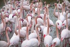 Flamingi przy półmrokiem Zdjęcia Royalty Free