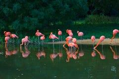 Flamingi różowią zoo ptaków naturę Zdjęcia Royalty Free