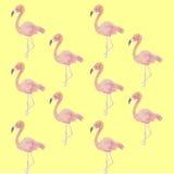 Flamingi, tło Obrazy Stock