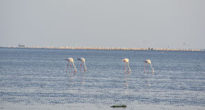 Flamingi tropi przy plażą Obrazy Royalty Free