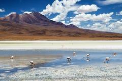 Flamingi w Boliwijskim Altiplano Obraz Royalty Free