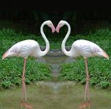 Flamingi w kierowym kształcie Zdjęcia Stock