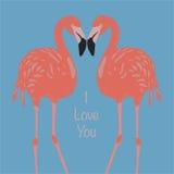 Flamingi w miłości Fotografia Stock