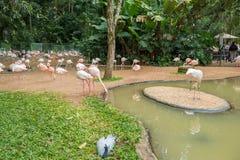 Flamingi z ich parami w Bird&-x27; s zdjęcie royalty free