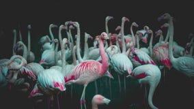 Flamingo över världen - Taipei royaltyfria foton