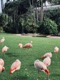 flamingo imagens de stock