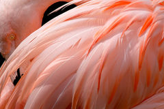 Flamingo Stock Photo