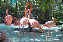 Free Flamingo Stock Photo - 14087430
