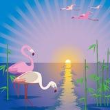 Flamingo. Two pink flamingos at sunset Royalty Free Stock Photos