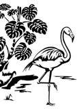 flamingo stock illustrationer