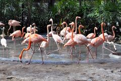 Flamingo. Royaltyfria Bilder