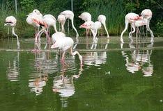 flamingo 3 ståtar arkivbilder