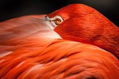 Free Flamingo Royalty Free Stock Photo - 41882455