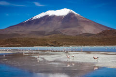 flamingo stockbilder