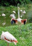 flamingo 5 ståtar royaltyfria bilder