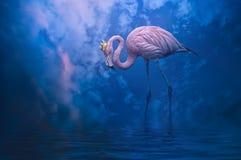 flamingo Imagem de Stock Royalty Free