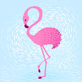Flamingo_1 Stockfoto