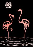 Flamingo Fotos de Stock Royalty Free