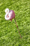 Flamingo. Sleeping Flamingo on a green meadow Stock Image