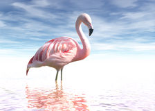 Flamingo. A photo of a flamingo Royalty Free Stock Images