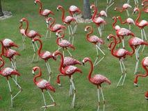 flamingo Stockfotografie