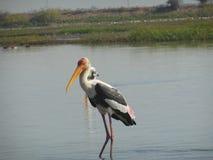Flamingo 3 Arkivbilder