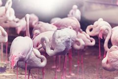 flamingo imagem de stock royalty free