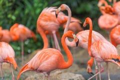 Flamingo aquatische vogel Royalty-vrije Stock Foto