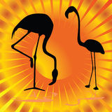 Flamingo auf orange Hintergrundvektorillustration Stockfoto