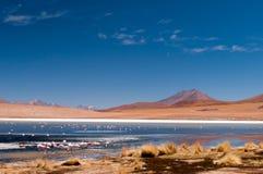 Flamingo av Laguna Colorada av den sydliga Altiplanoen av Bolivia arkivbilder