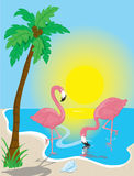 Flamingo Beach Royalty Free Stock Photo