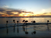 Flamingo on a beach during sunset Stock Photo