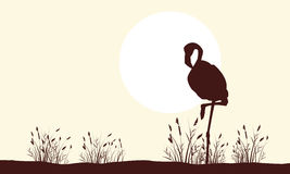 Flamingo beauty landscape silhouettes collection Stock Photo