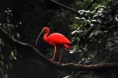Flamingo bei Parque DAS Aves Stockfotos