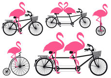Flamingo on bicycle, vector set Stock Photography
