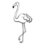 Flamingo bird black white sketch  illustration. Vector Royalty Free Stock Image