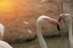 Flamingo bird Focus only on header stock photography