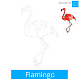 Flamingo bird learn to draw vector Stock Photography