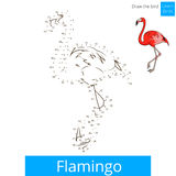 Flamingo bird learn to draw vector Stock Photo