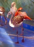 Flamingo bird neck plumage   beak   pink Stock Photos