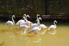 Flamingo bird Stock Photos