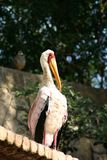 Flamingo bird on roof. Side view of flamingo bird on roof with leafy trees in background Stock Photo