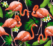 Flamingo Bird and Tropical Flowers Background. Seamless pattern Royalty Free Stock Photo