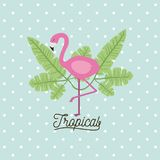 Flamingo bird tropical with leaves on decorative dots color background. Vector illustration Royalty Free Stock Photography