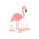 Flamingo Bird Vector Stock Images