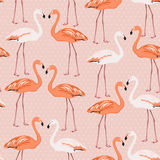Flamingo birds couple pattern on pink polka dot Royalty Free Stock Image
